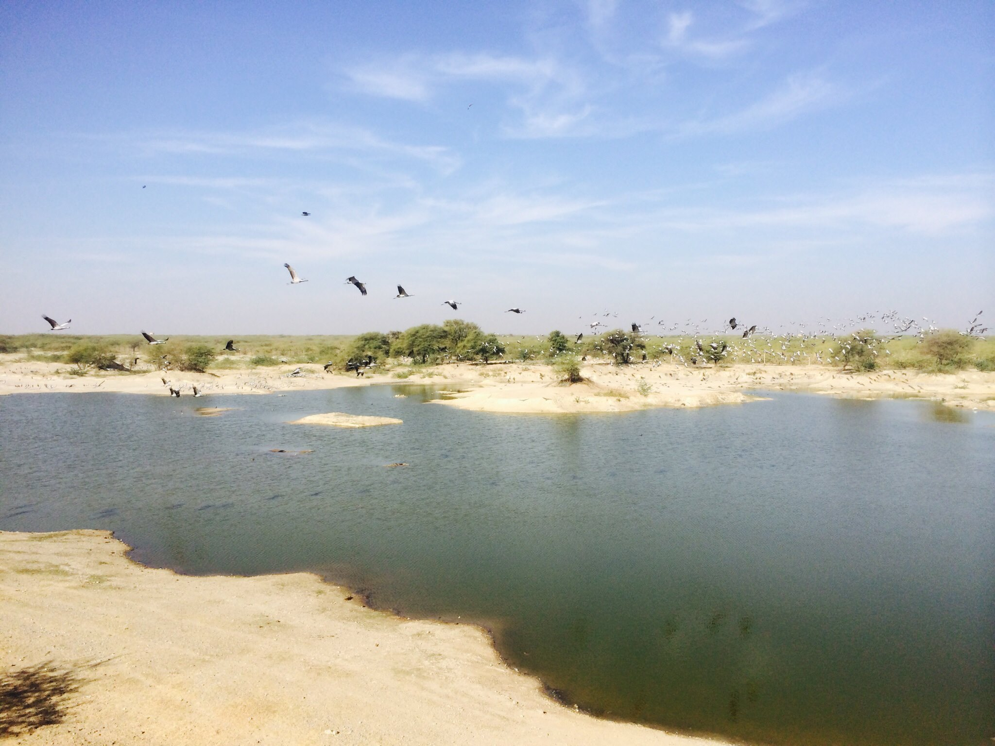 jodhpur-bird-sanctuary